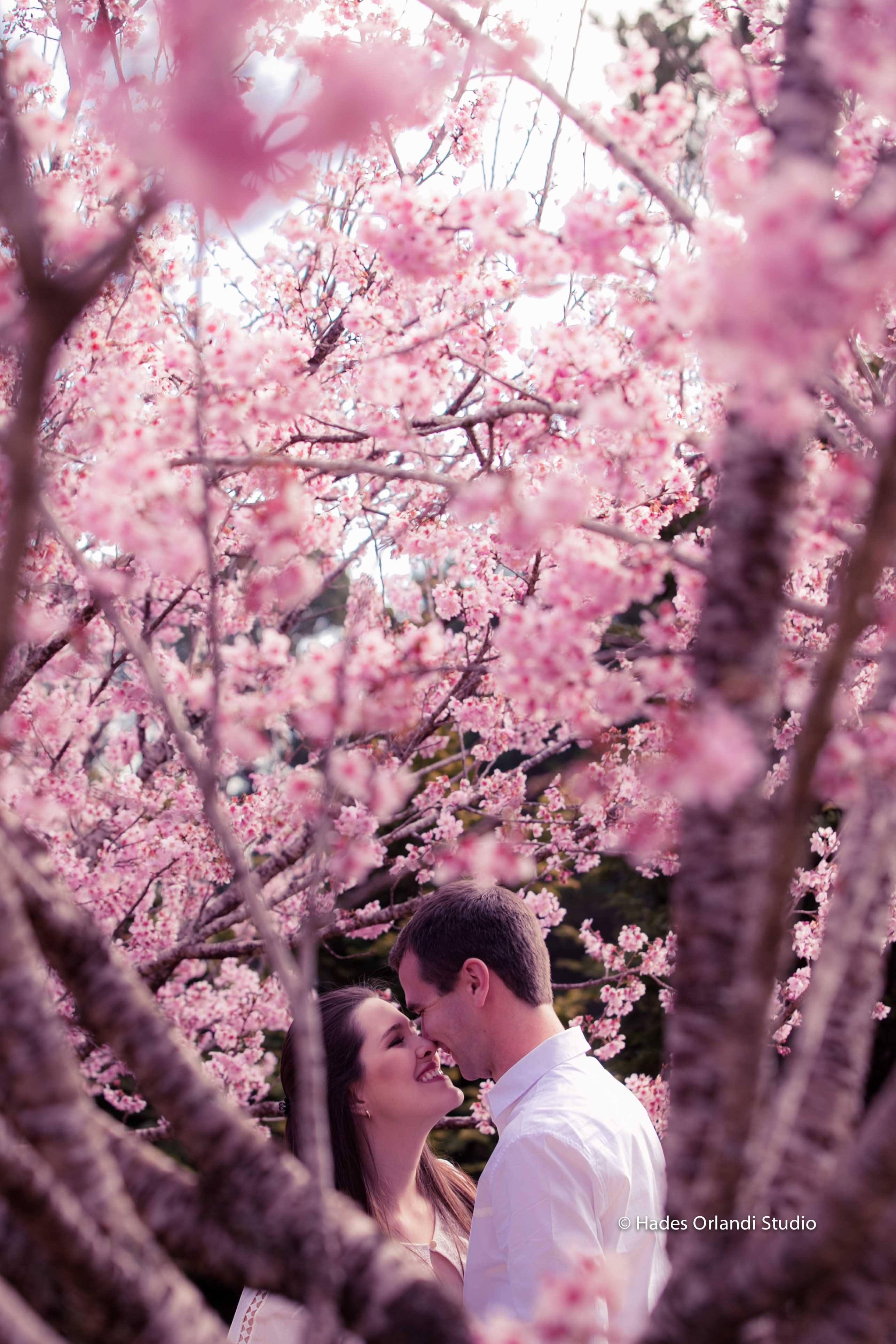 Você está preparado para o florescimento das cerejeiras em 2020?