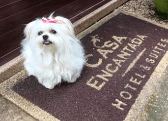 Hospedagem Pet Friendly